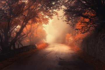 Mystical autumn red forest with road in fog. Fall misty woods. Colorful landscape with trees, rural road, orange and red leaves, and yellow fog. Travel. Autumn background. Magic dark forest. Fairytale