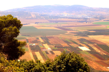 View on agriculture valley with fields and olive plantations,Israel