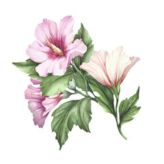 Sprig of hibiscus. Hand draw watercolor illustration.