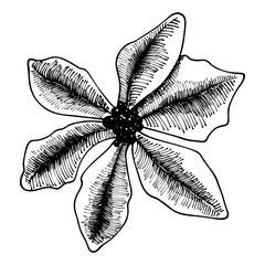 Holly flower decoration. Christmas and holiday hand drawn element.