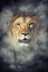 Wall Mural - Lion in smoke on dark background