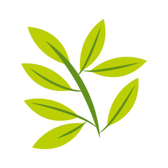 leafs plant decoration isolated icon vector illustration design