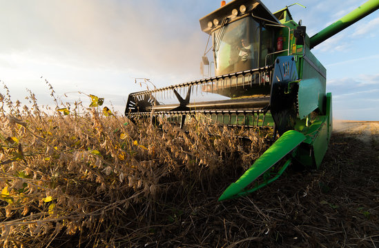 soybean harvest in autumn