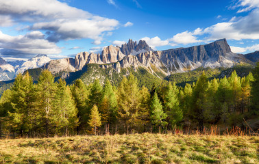 Beautiful forest mountain landscape in Alps