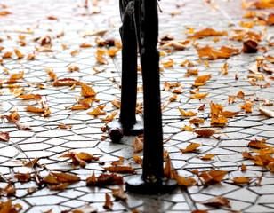 Orange Autumn Leaves .Season concept