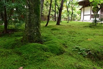苔庭(井山宝福寺)