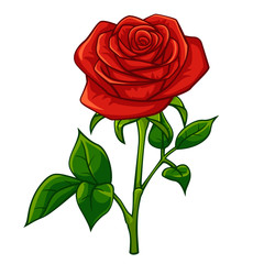 Red rose cartoon style