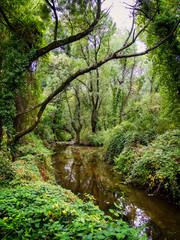 Rio y bosque verde frondoso