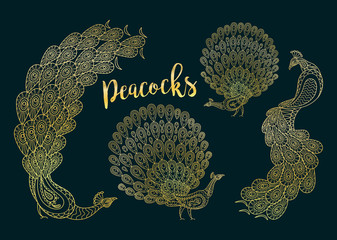 Golden peacocks set on the dark turqiouse background. Vector illustration