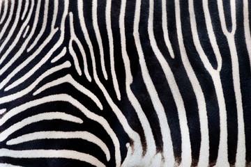 Zebra texturae pattern