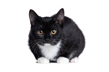 Black kitten sitting close up  front view on white background