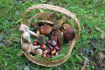 mushrooms and chestnuts in a wicker basket