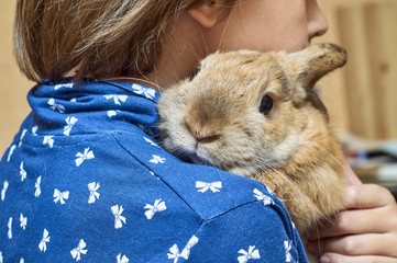 Rabbit on girl's shoulder
