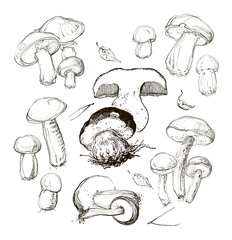 vector hand drawing a set of mushrooms