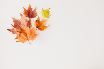 Maple Leaf composition