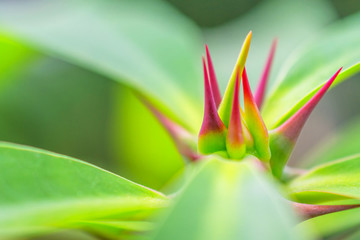 macro detail of a colored tropical plant