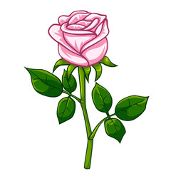 Pink rose cartoon style