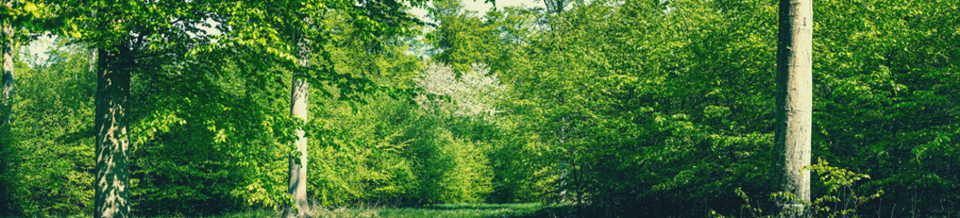 Panorama forest scenery in green colors