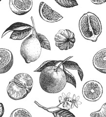 Seamless pattern with citrus fruits. Hand drawn illustration. Vector.