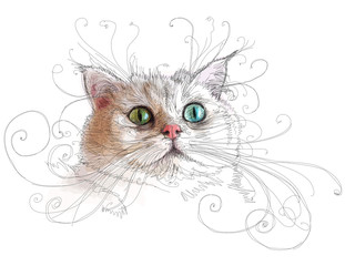Portrait of attractive cat. Linear vector color  illustration