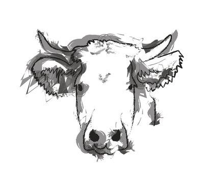 Tête de vache
