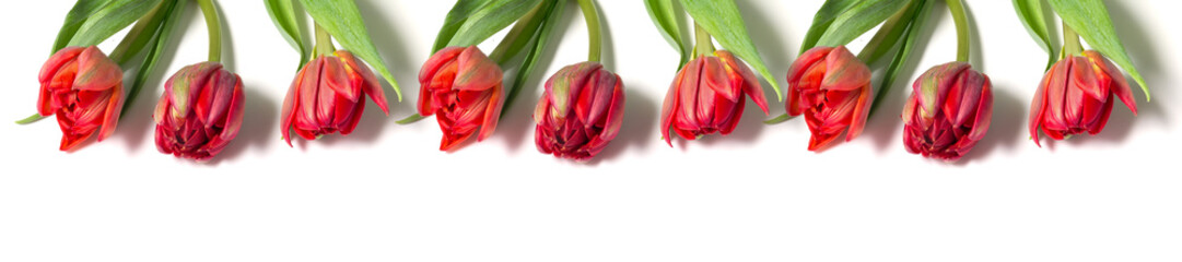Wall Mural - panorama bouquet of red tulips