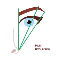 Right brow shape