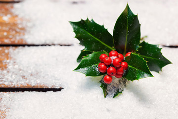 Christmas holly in the Snow