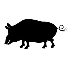 Silhouette of a pig, wild boar who is looking for food