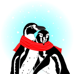 cute penguin cartoon couple with love. image with scarf and snow. vector illustration.