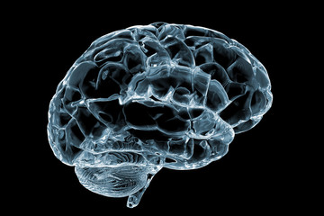 cerebro cristal
