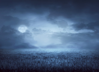 Fog surrounds meadow at night