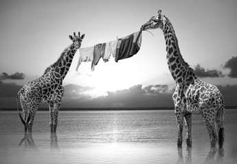 Composite de girafes Hakuna Matata