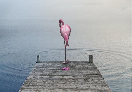 Flamingo am Pier – Composite