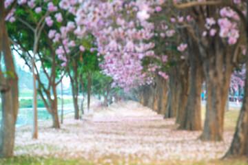Blurred sakura