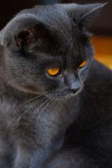 Black cat look.
