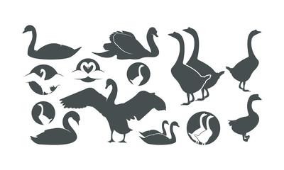 swan siluet vector illustration/ logo