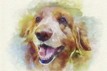 digital painting dog portrait