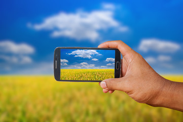 Hand holding smart phone focused on rice field landscape on blurry background.