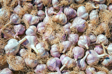 A jumble of fresh purple garlic in a village market