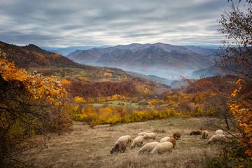 Golden autumn / Amazing autumn view of a mountain meadow in the central Balkan Mountains, Bulgaria