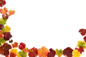 Blätter von Weinreben als Umrandung für Plakte Flyer Anzeigen