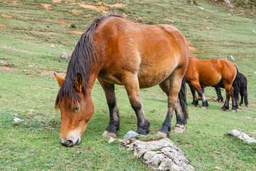 Caballos pastando. Parque Natural de Las Ubiñas y La Mesa, Asturias.