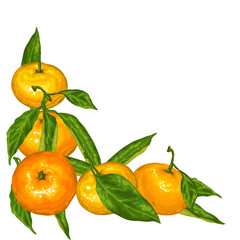 Decorative element with mandarins. Tropical fruits and leaves