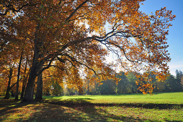 Autumn tree nature fall season