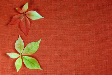 Autumn leaves over textile background