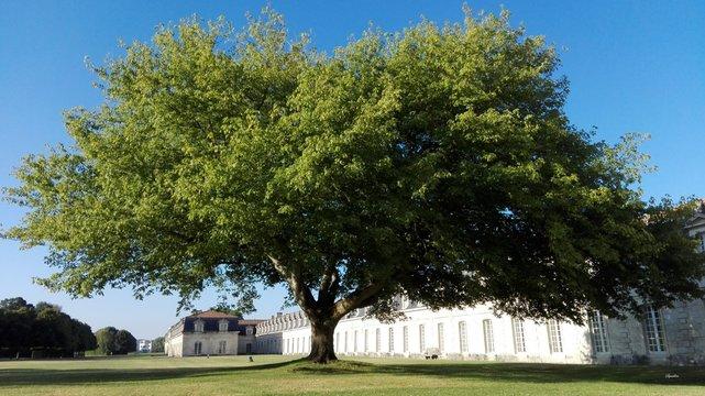 Corderie royale Rochefort Tree