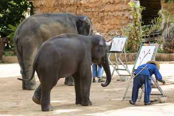 Mahout trains wild elephant to paint picture for tourism in thai