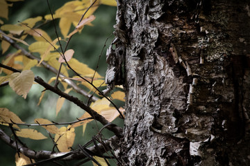 tree in fall detail background