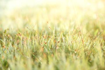 Fresh grass with dew background